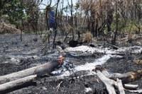 Câmara quer ação da Secretaria de Meio Ambiente no Berçário das Garças